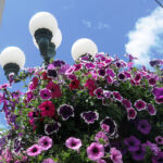 City Hall Floral