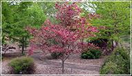 arboretum-a