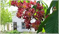 floral-a